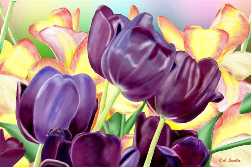 Purple Tulips - by R.A. Smoller