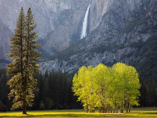 Waterfall and Trees, Spring Evening - photograph by G Dan Mitchell